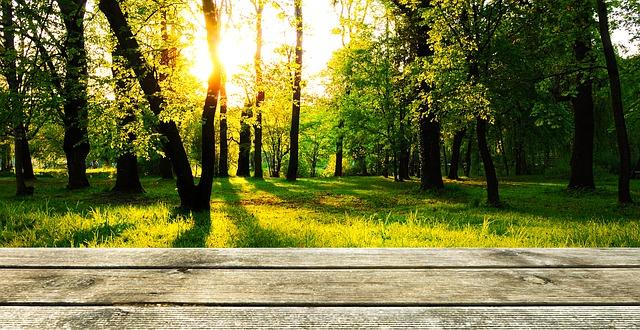 terrasse en bois iroko